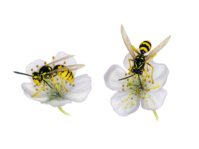 Oup_pollination