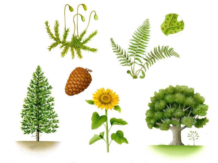 Oup_plants