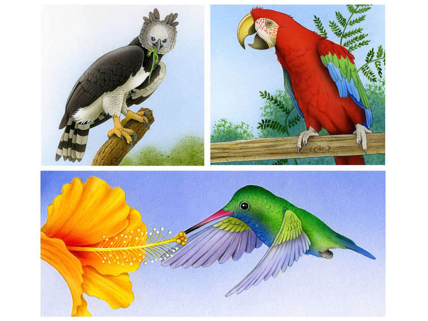 Tropical_birds