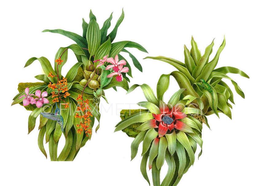 Botanical_fiammetta_dogi_09