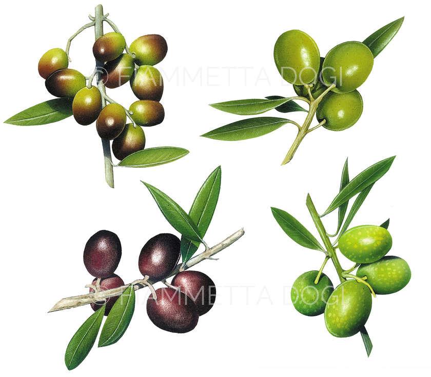 Botanical_fiammetta_dogi_11