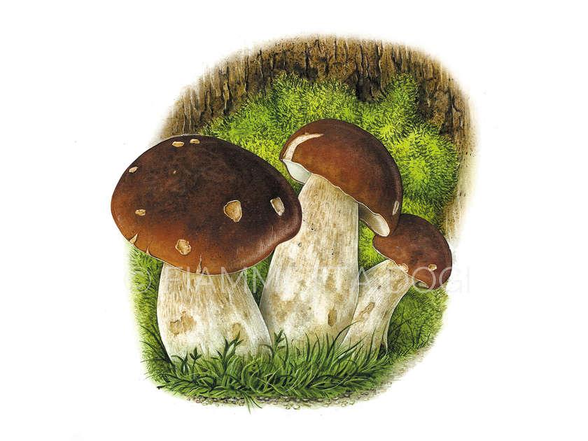 Botanical_fiammetta_dogi_16