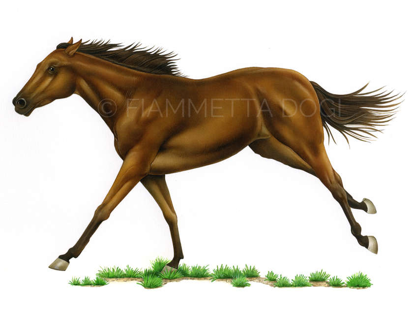 Thoroughbred_fiammetta_dogi