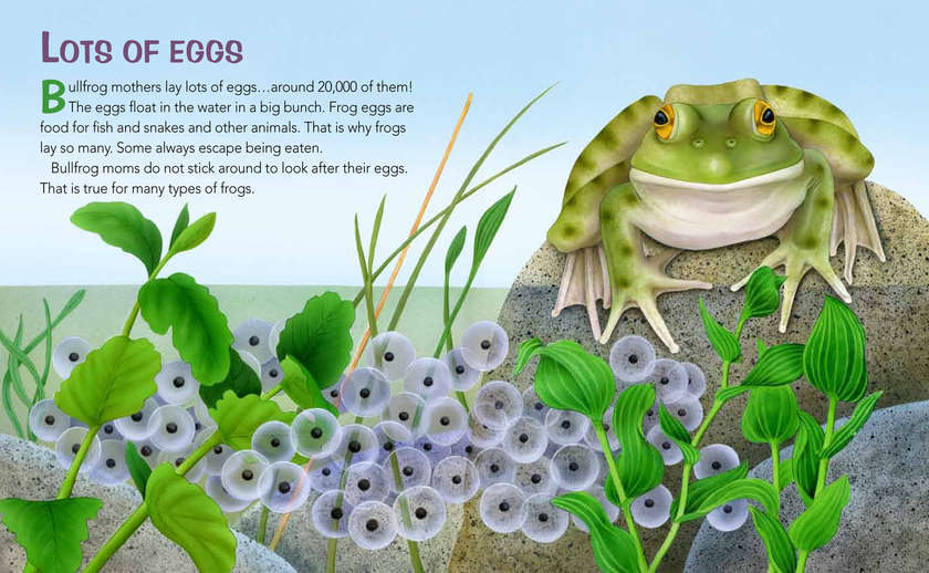Frogs_life