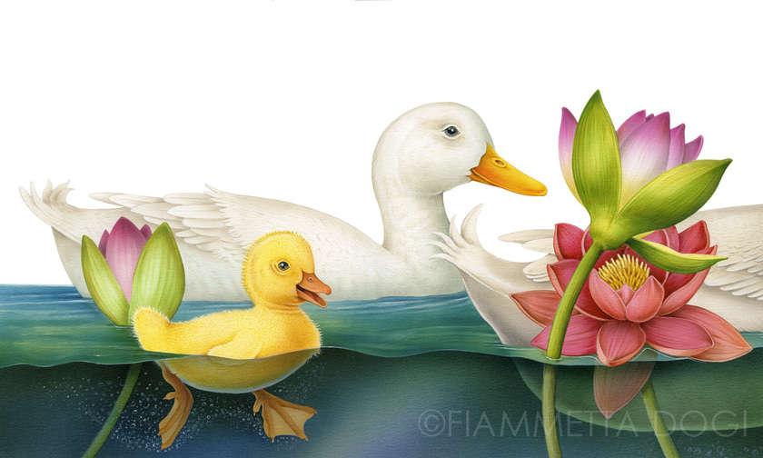 Fdogi_ducks
