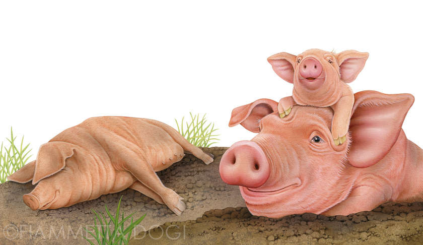 Fdogi_pigs